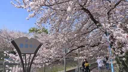 善福寺川緑地4