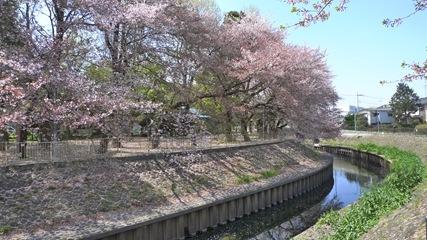 善福寺川緑地1
