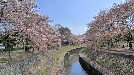 善福寺川緑地2