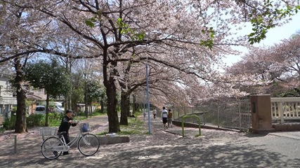 善福寺川緑地3