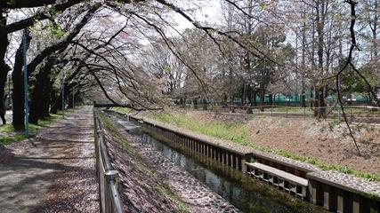 善福寺川緑地5