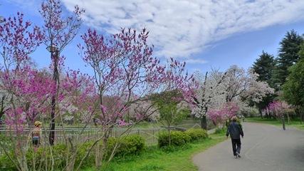 善福寺川緑地8